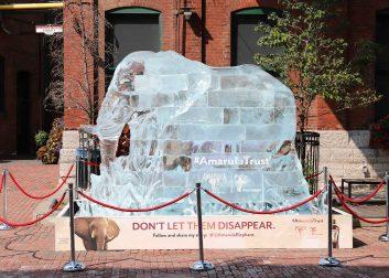 Amarula elephant ice sculpture