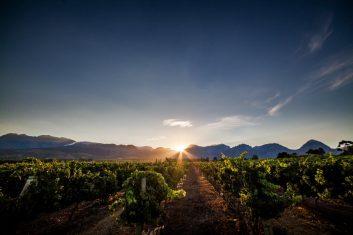 Nederburg vineyard at sunrise
